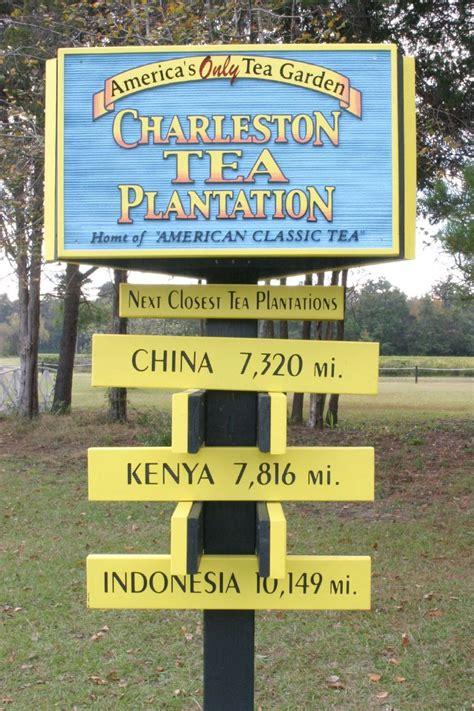 Charleston Tea Plantation - Wikipedia