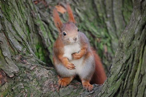 Eichhörnchen im Baum - Schöpfung
