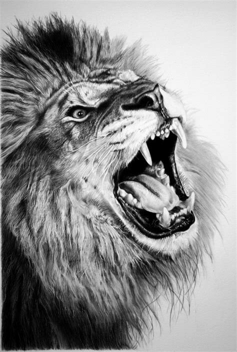 cool lion drawings  inspiration hative