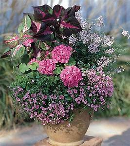 17 Best images about Summer Flowers in Pots.... on ...