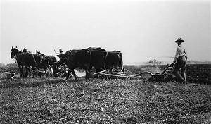History of Agriculture to the Second World War | The ...