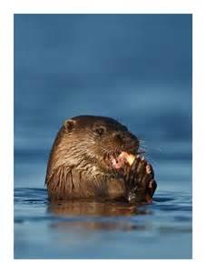 Sea Otter Habitat