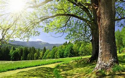 Nature Thewowstyle Beauty Pretty Trees