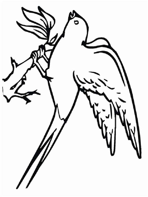 swallow coloring pages   print swallow