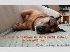 Überraschungspaket Hund ein Hundeblog der zeigt, wie