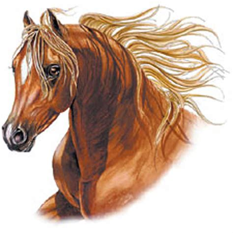 batteries de cuisine t shirt femme manches courtes tête cheval brun recto