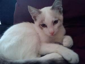 mon chat fait pipi sur le canape que faire question With pipi chat parquet