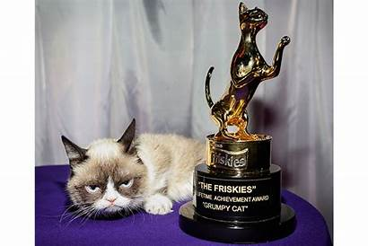 Grumpy Memes Cat Animal Science Why Explains