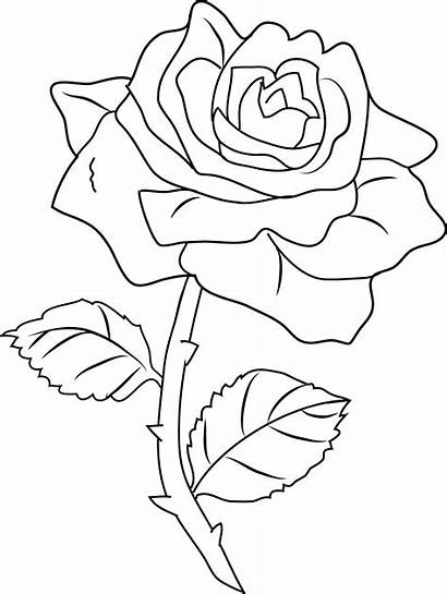Rose Clipart Coloring Pages Line Clipground