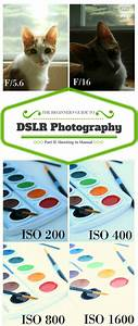 The Beginner U0026 39 S Guide To Dslr Photography  Shooting In