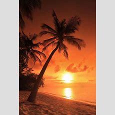 Strand, Palme, Sonnenuntergang Sonnenuntergang