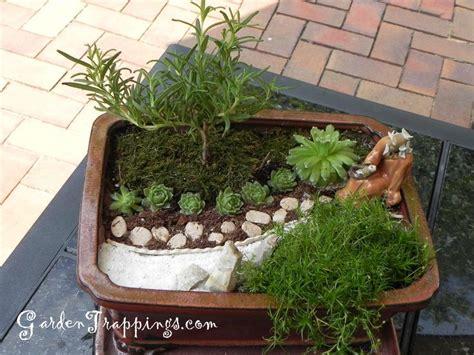 rosemary bonsai diy miniature zen garden and rosemary