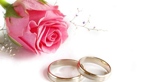 wedding rings rose flower hd wallpaper khochu zdes
