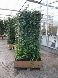 Sichtschutz Pflanzen Pflegeleicht : pflanzenspecial heckenelemente exklusivit t und ~ A.2002-acura-tl-radio.info Haus und Dekorationen