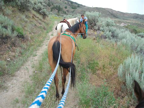 horse territorial horses herd resident chaco leader trail following