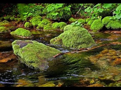 Morning Birds And Gentle Stream In Forest ☆ Relaxation And