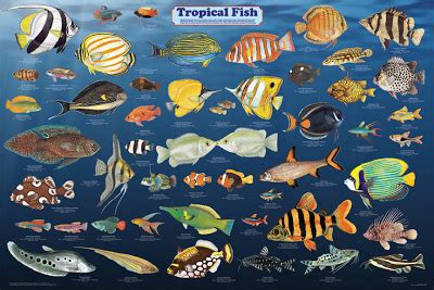 types  cold water fish  types