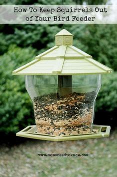 homemade squirrel baffle to keep squirrels out of your bird feeders or getting into your bird