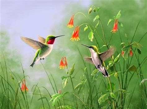 Summer Animal Wallpaper - summer jewels birds animals background wallpapers on