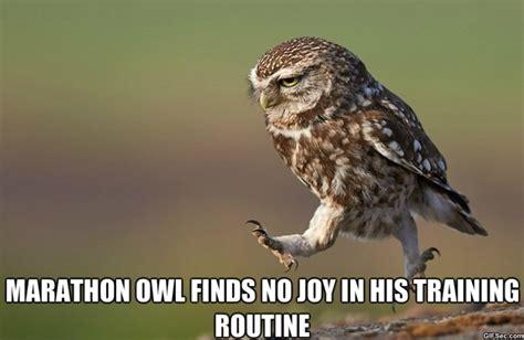 Funny Owl Meme - funny owl jpg