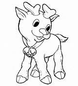 Reindeer Coloring Rudolph Nosed Drawing Printable Scribblefun Getdrawings Clipartmag sketch template