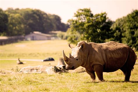 The expert's guide to planning the ultimate Kenyan safari ...