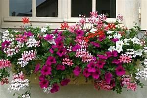 Choisir une plante pour jardiniere quelques idees et for Lovely idees de terrasse exterieur 2 lierre planter et tailler ooreka