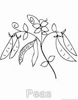 Peas Coloring Pages Vegetable sketch template