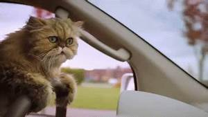 Cat Driving GIF - Find & Share on GIPHY