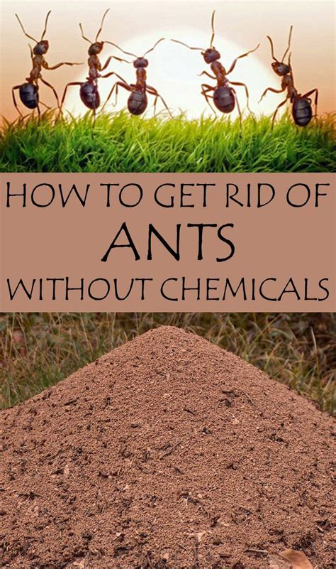 rid  ants  chemicals rid  ants