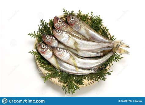 grouper fish japanese saltwater akita cuisine