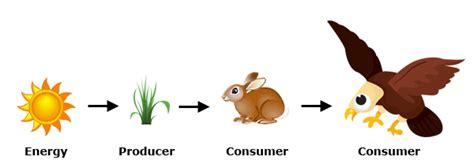 cadena alimenticia de animales gallery cadena