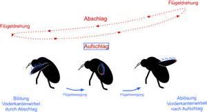 Fliegen In Der Erde : sind hummeln wirklich zu dick zum fliegen spektrum der ~ Lizthompson.info Haus und Dekorationen