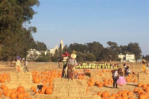 the godmothers of timothy murphy school pumpkin field st 318 | godmothers3 0