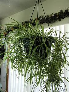 The, Best, Plants, For, Your, Office, And, Home, See