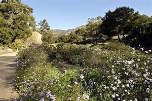 Santa barbara botanical gardens favorite places spaces for Botanical gardens santa barbara