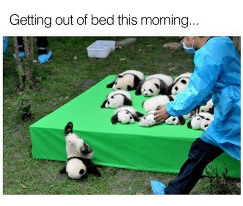 Get Out Of Bed Meme - getting out of bed this morning dank meme on sizzle