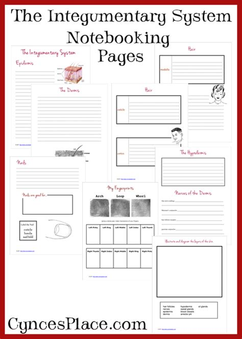human body integumentary system notebooking pages