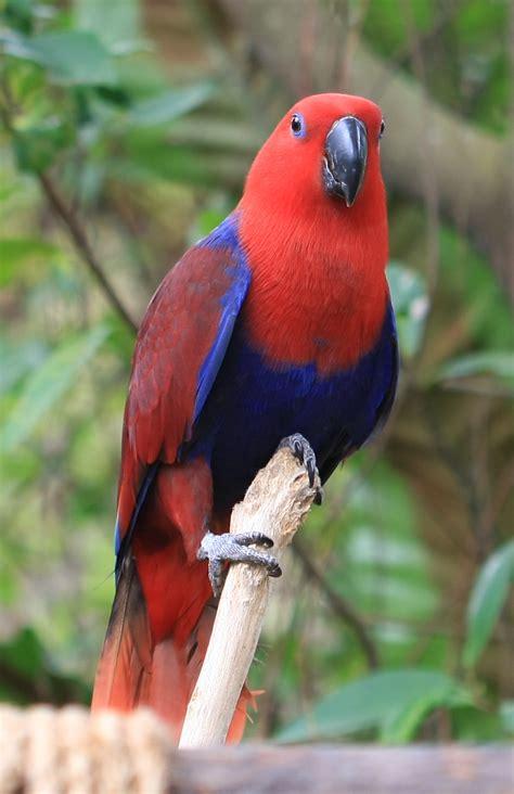 pet parrot pet parrots species amazing wallpapers