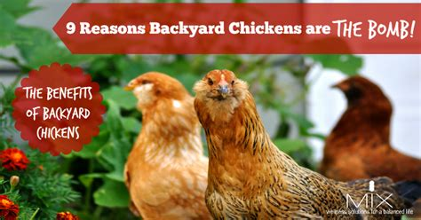 Reasons Backyard Chickens Are The Bomb