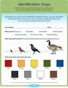 Free Printable Bird Guide