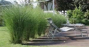 Sichtschutz Immergrün Winterhart : gr ser sichtschutz terrasse und gartengestaltung ~ Michelbontemps.com Haus und Dekorationen