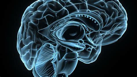 Digital Brain Wallpaper by Brain Cool Wallpapers Top Free Brain Cool Backgrounds