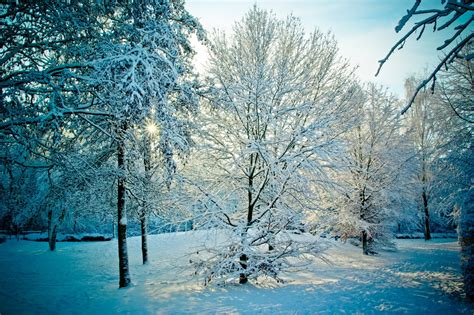 snowy alaskan cluster light tree free images tree nature forest branch cold sunset