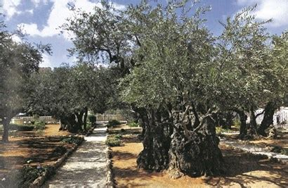 Garden Of Gethsemane Bible by Myth Of The Bible Is Deliverance