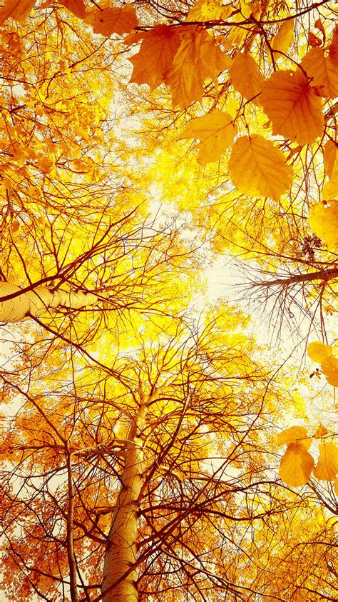 Iphone 11 Wallpaper Hd Autumn by Autumn Trees Iphone Wallpaper Hd