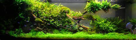 blog fluval aquarium