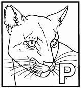 Panther Coloring Colorir Desenhos Coloriage Panthere Panteras Coloriages Imprimer Animaux Printable Animal Designlooter Expert Animals Template sketch template