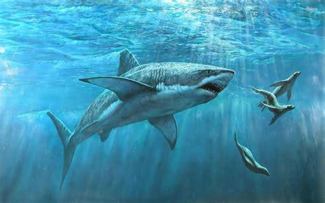 tiburon fondos de pantalla de tiburones wallpapers hd gratis