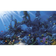 Shop Environmental Graphics Dolphin's Paradise Wall Mural